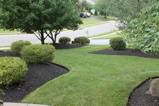 Pittsburgh Softscapes using Mulch and Soil